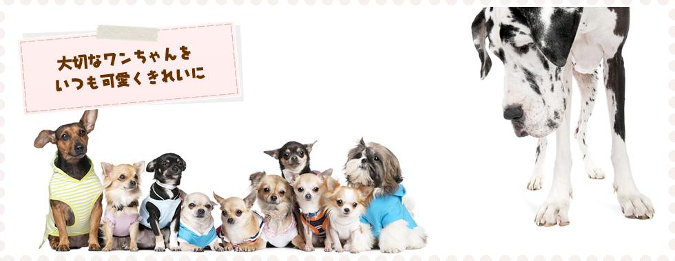 ペット用シャンプー・ペットホテル・トリミング・調布市の犬の美容室NOAトップ画像